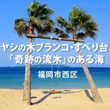 【糸島】奇跡の流木とヤシの木ブランコが人気の海 夏はバーベキュー冬は牡蠣小屋も