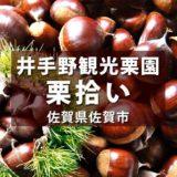 井手野観光栗園 2020年 福岡近郊で栗拾い!大きい栗&軽トラに子どもが喜ぶ!