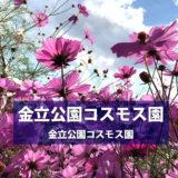 【佐賀市】金立公園 コスモス園 2020年の見頃は?遊具とセットで遊べて子どもが喜ぶ!