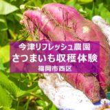 2020年 福岡市内でお芋堀り!今津リフレッシュ農園 サツマイモ収穫体験 募集開始
