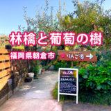 福岡で柿狩り!「林檎と葡萄の樹」果物狩りとアップルパイのお店