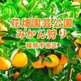 福岡市内でみかん狩り「花畑園芸公園」市民じゃなくても収穫体験に応募できます