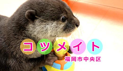 【コツメイト 福岡大名店】コツメカワウソと触れあえる動物広場。ハリネズミとフクロモモンガもいるよ