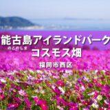 【福岡市西区】能古島アイランドパークのコスモス 2021年 見頃はいつ?