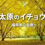 【八女郡】太原のイチョウ 2021年 見頃はいつ?福岡の紅葉スポット